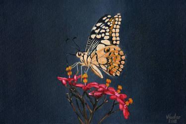 Butterfly by Vladar4