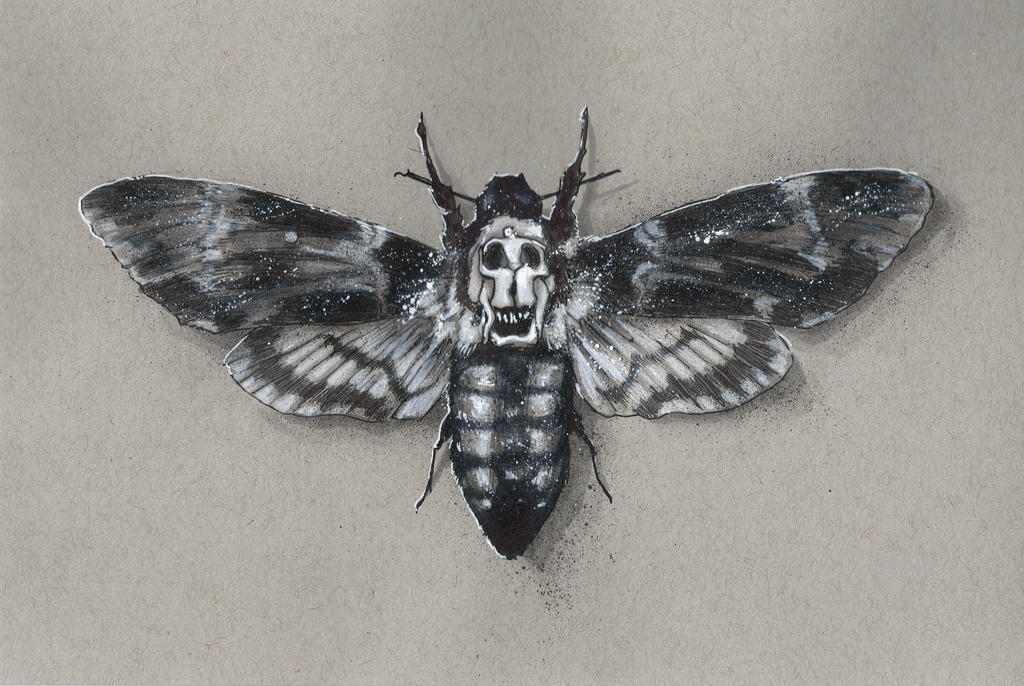 death of moth The death's-head hawkmoth, which figures into the plot and is prominently  featured in the movie poster, is no invention of fiction while the.