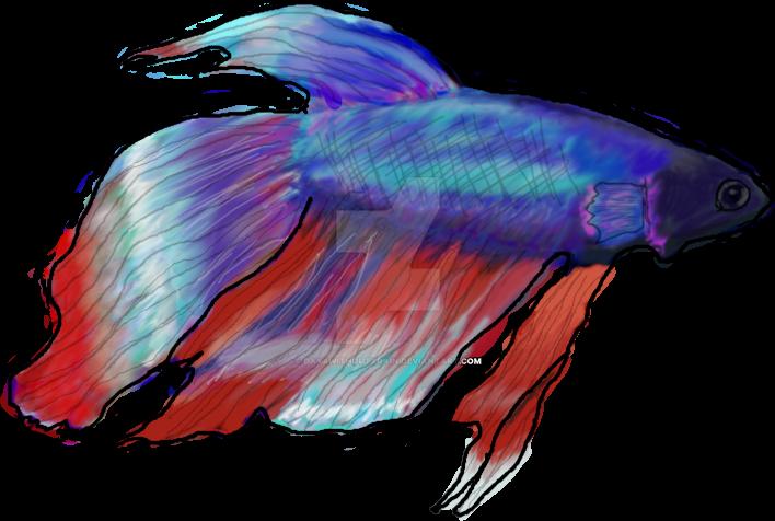 betta fish by dayxwithoutxrain