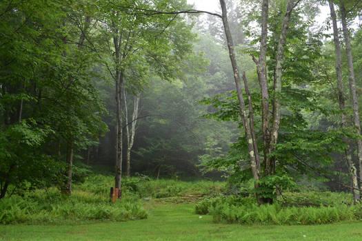 Enchanted Backyard