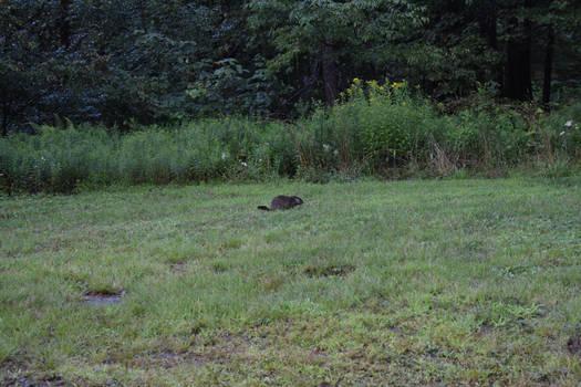 A little beaver guy