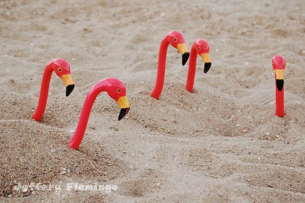 Jeffery 'N Co. by Jeffery-the-Flamingo