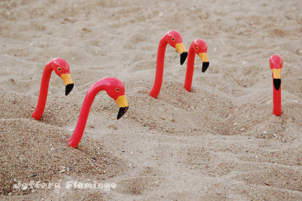 Jeffery 'N Co. by Jeffery-the-Flamingo