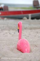 Enjoying the View by Jeffery-the-Flamingo