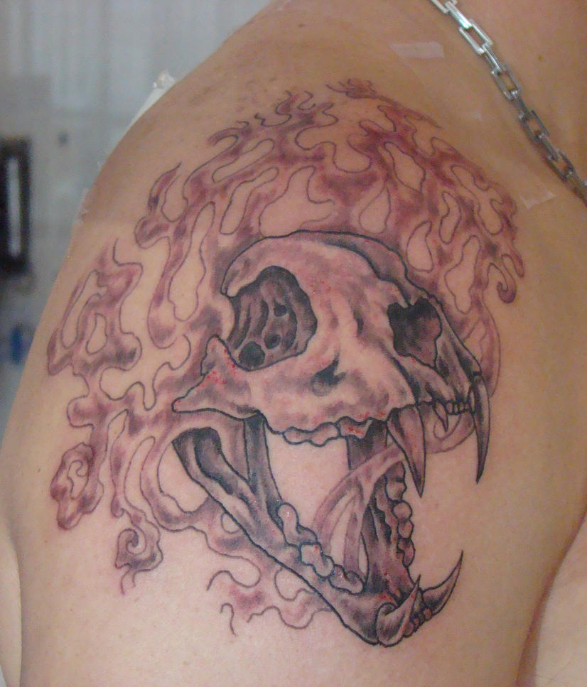 Mountain lion skull by suzannewood on deviantart for Lion skull tattoo