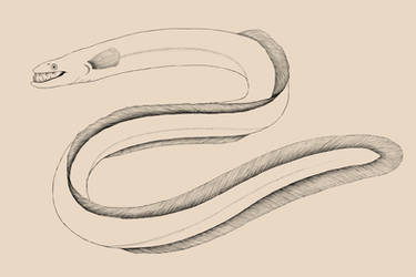 Bestiary- Yellow-spotted longfinned eel by SarHar-Car