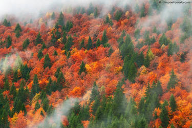 Forest in fog by SimonePomata