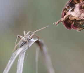 Spider Touch