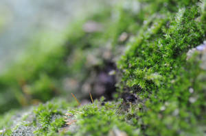 Mossy Fields of Green