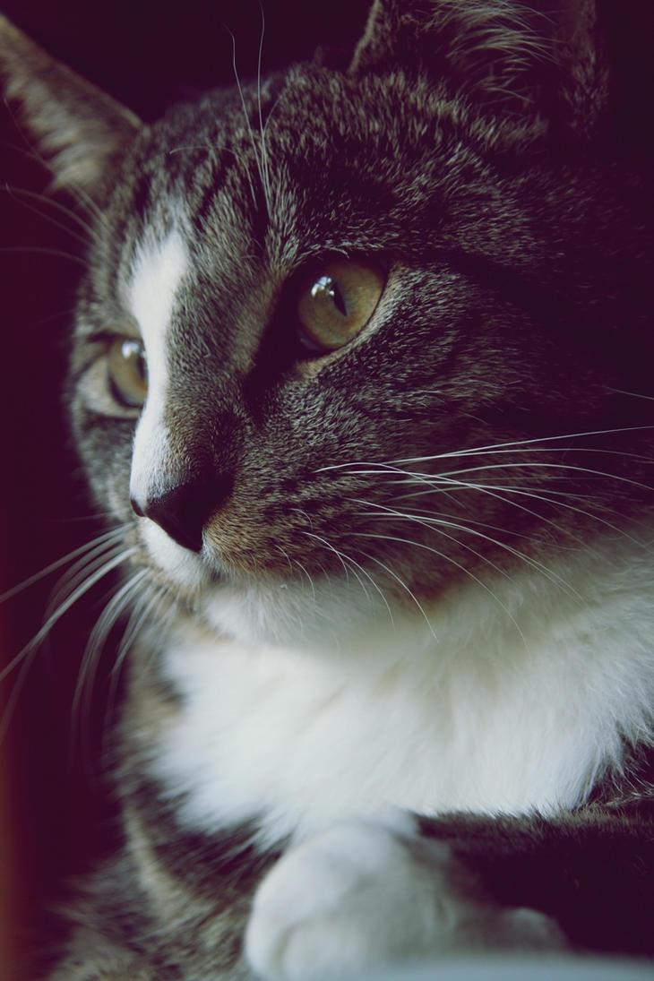 My fluffy cat by Flowerlight