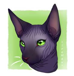 Sphynx cat - 1 by IreMau
