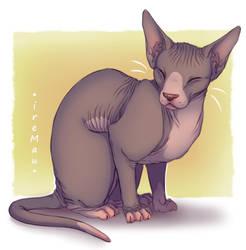 Sphynx cat - 2 by IreMau