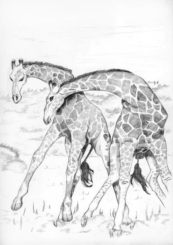 Giraffes by bananacosmicgirl