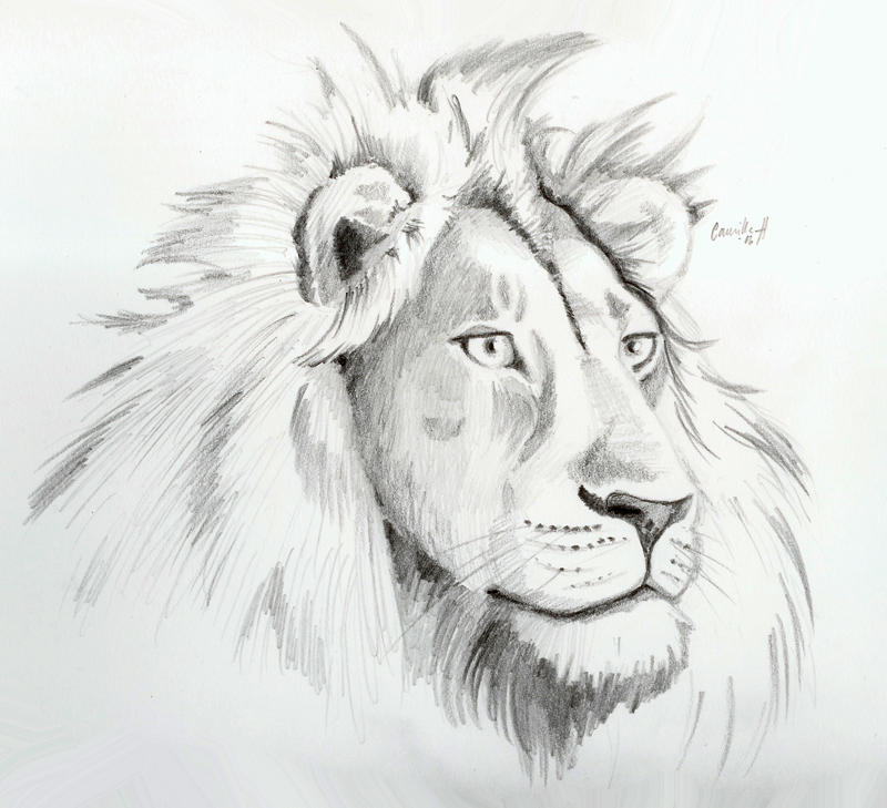 Male Lion Face Drawing