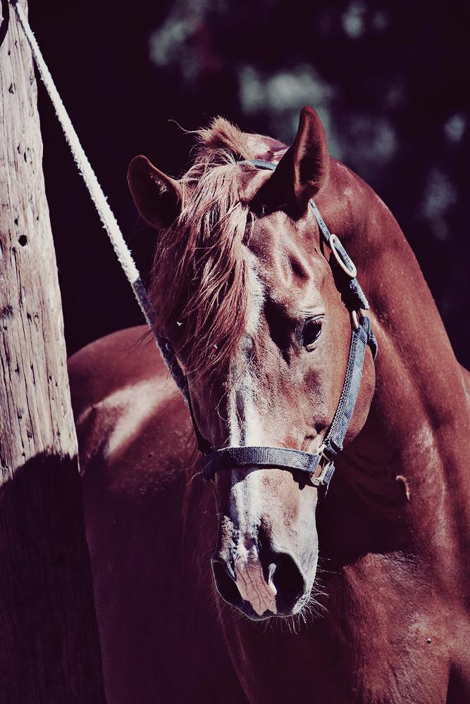 The Stallion by xxmemorabilia