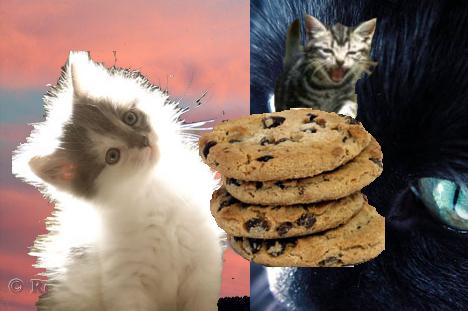 Cats Respect Cookies by cookiestealer01