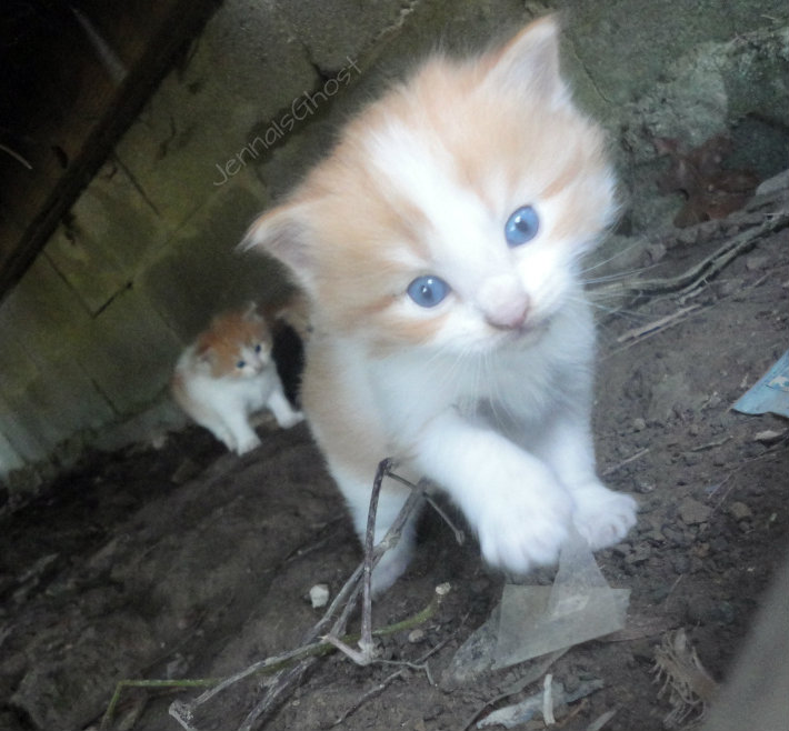 Cute Kittens by JennaIsGhost