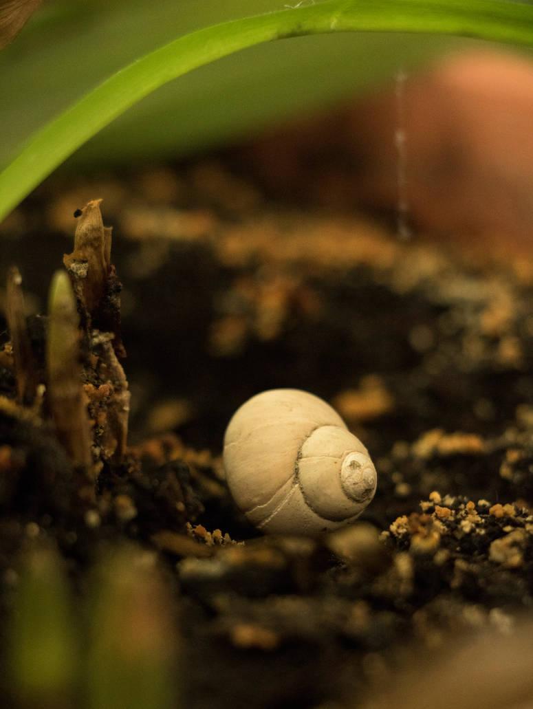Nature's little wonder 2