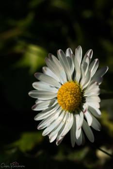 Nature's little wonder 4