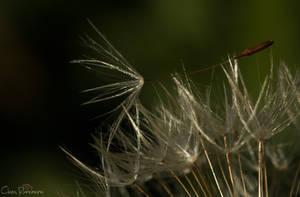 Nature's little wonder 5 by PinkVillain