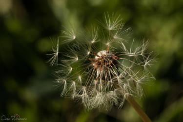 Nature's little wonder 6