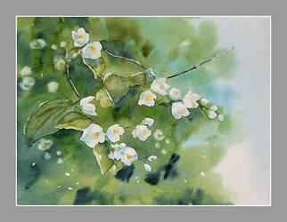 Jasmine by stokrotas