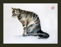 Soft cat by stokrotas