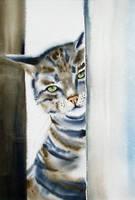 Ciekawski Kot by stokrotas