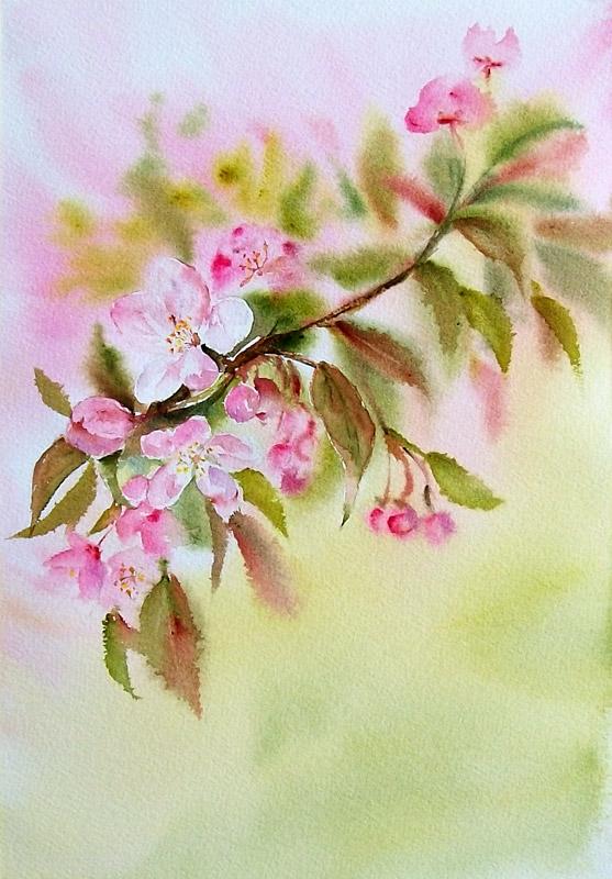 Cherry blossom by stokrotas