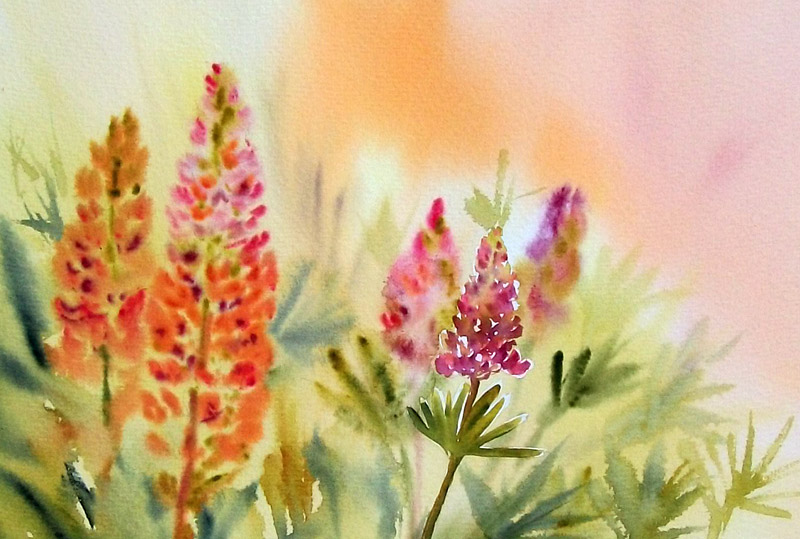 Evening lupins by stokrotas