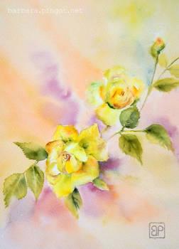 Zlocista Uroda\ Golden beauty