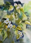 Cienisty Jasmin/shadowy jasmine by stokrotas