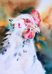 Kurza Baronowa/Chicken baroness by stokrotas