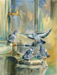 Weneckie golebie/Venetian pigeons by stokrotas