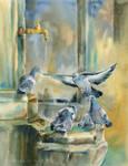 Weneckie golebie/Venetian pigeons