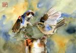 Pierzasta Walka/ Feathered fight