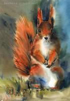 Zamyslony rudzielec/Thoughtful squirrel by stokrotas