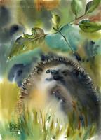 Weszacy jezyk/sniffing hedgehog by stokrotas