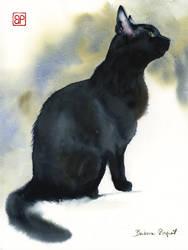 Jej wysokosc Kota/ Her majesty  the Cat by stokrotas