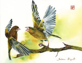 Wiosenna Awantura/Spring quarrel by stokrotas