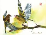 Wiosenna Awantura/Spring quarrel