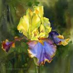 Barwne Slonce/Colorful sun