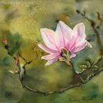 Magnolia Eve