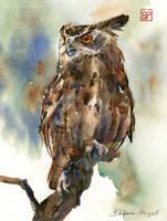 Sowa Sofia/ Sophia the Owl
