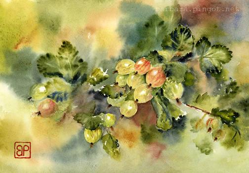 Agrestowy Gaszcz/Gooseberry thicket