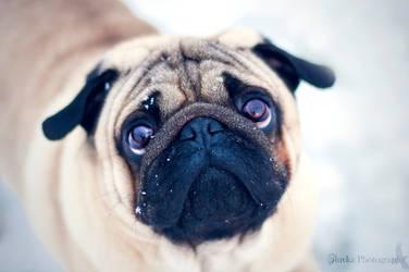 It's snow! by Zluvka