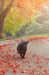 Running pug