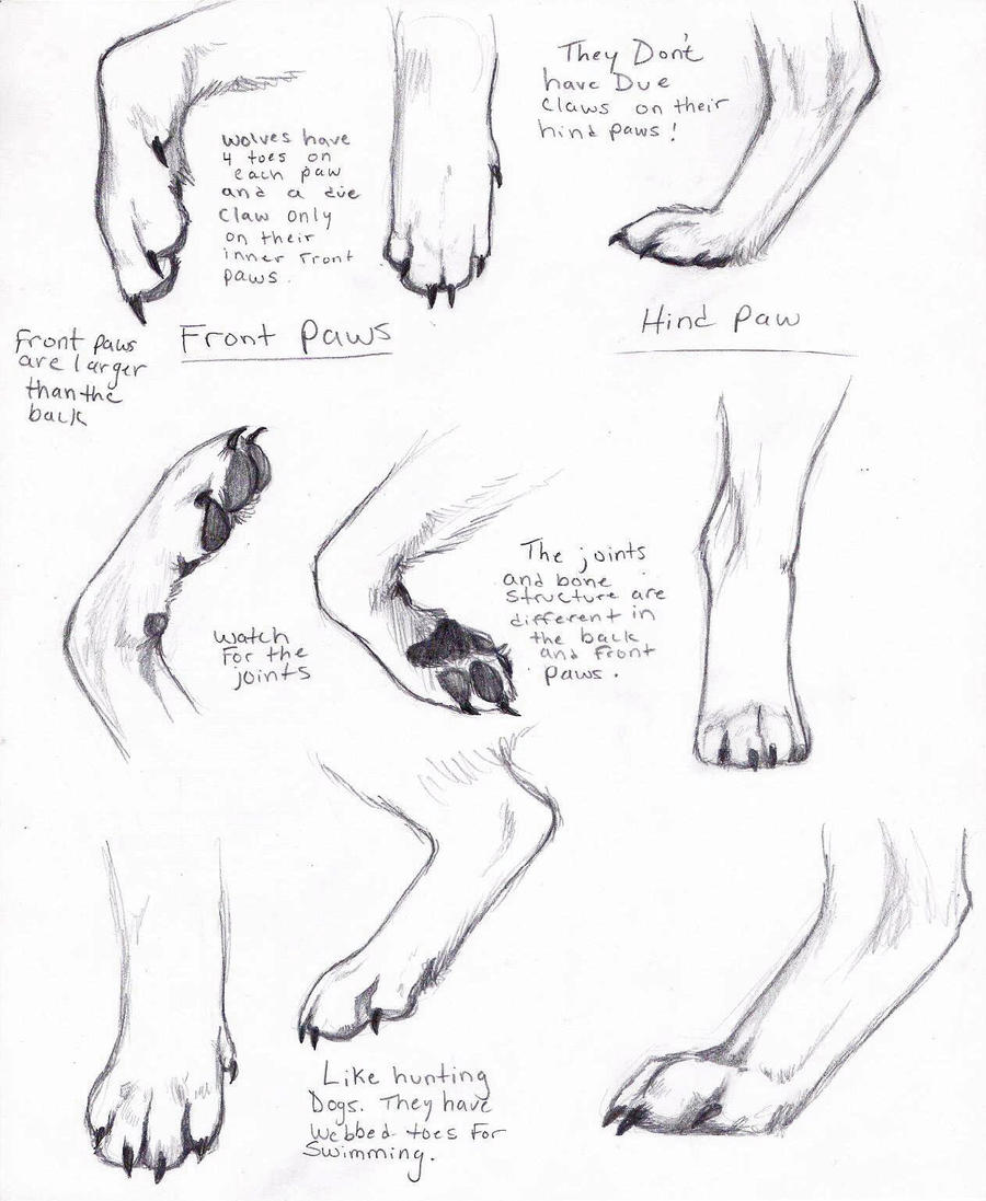 Wolf Paws by AdothWolf on DeviantArt