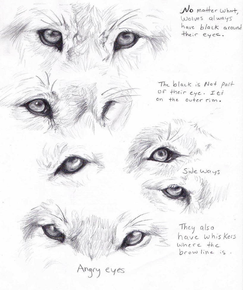 Wolf eyes by AdothWolf on DeviantArt
