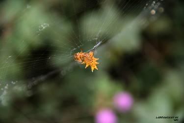 Spider Upside Her by Laernu